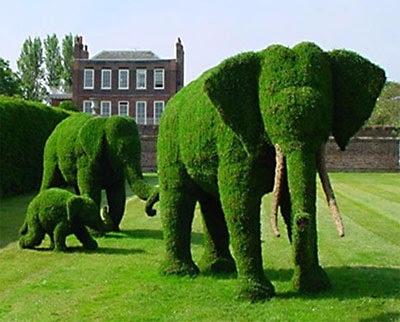 Формы садовых кустарников